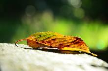 Rachat de crédit : les meilleurs taux en automne